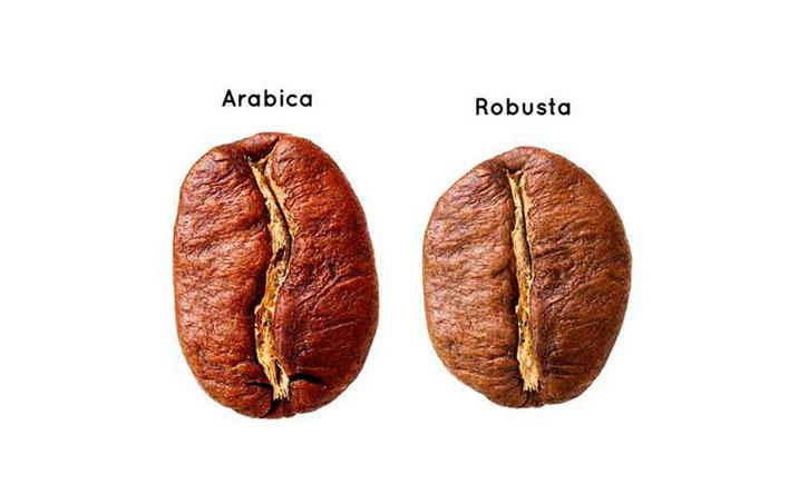 Tipos de grão de café arábica e robusta